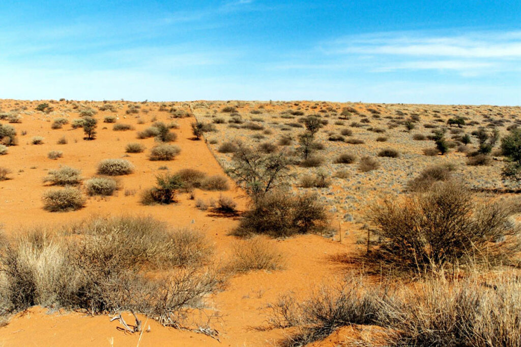 an introduction to the location and environment of the people of kalahari desert The desert environment when most people think of a desert, they imagine a landscape covered with sand and sand dunes the plants and animals that live in a desert must be adapted to the environment plants must be very tolerant to intense sun, prolonged periods without precipitation.