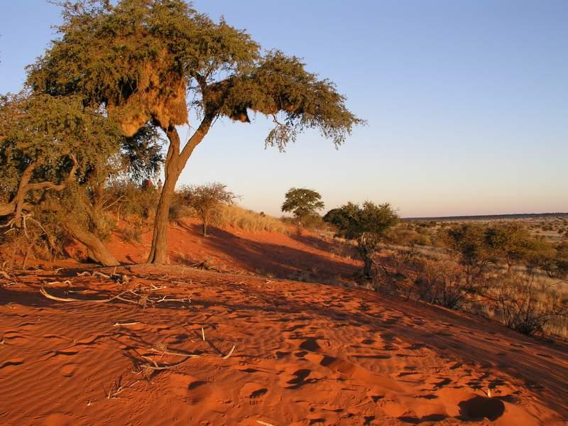 пустыня Калахари фото