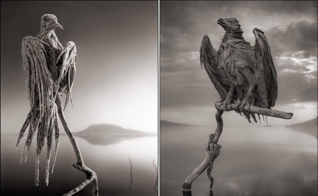 озеро Натрон превращает животных в камень