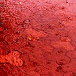 Кровавый дождь: необъяснимое явление природы