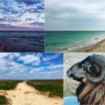 Бирючий остров — чудо украинского Приазовья