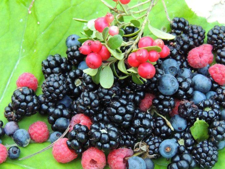 ягоды в Карпатах