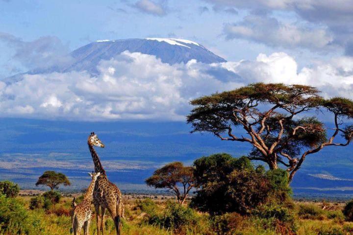 Килиманджаро фото
