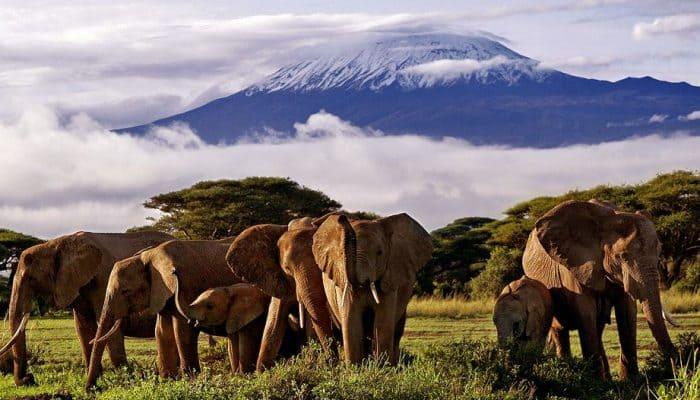 где находится Килиманджаро
