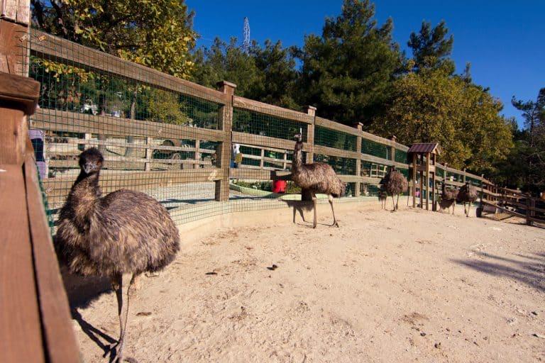 Сафари-парк Геленджик адрес, официальный сайт
