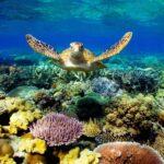 Большой Барьерный риф – уникальное чудо Австралии