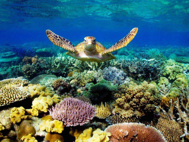 виды большого барьерного рифа
