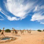 Пустыня Калахари