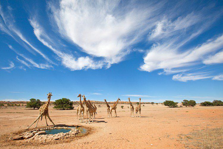 Калахари Африка