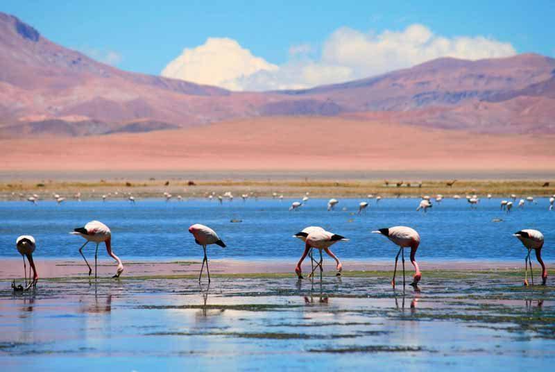 чилийская пустыня атакама