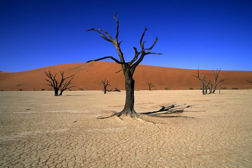 пустыни Африки Намиб