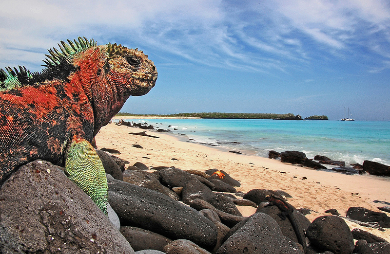 Галапагосские острова игуана