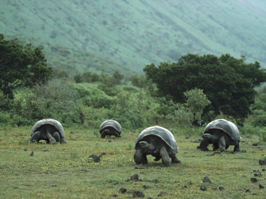 Галапагосы