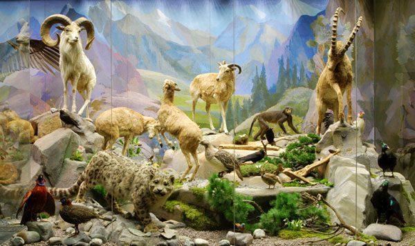 Дарвиновский музей в Москве